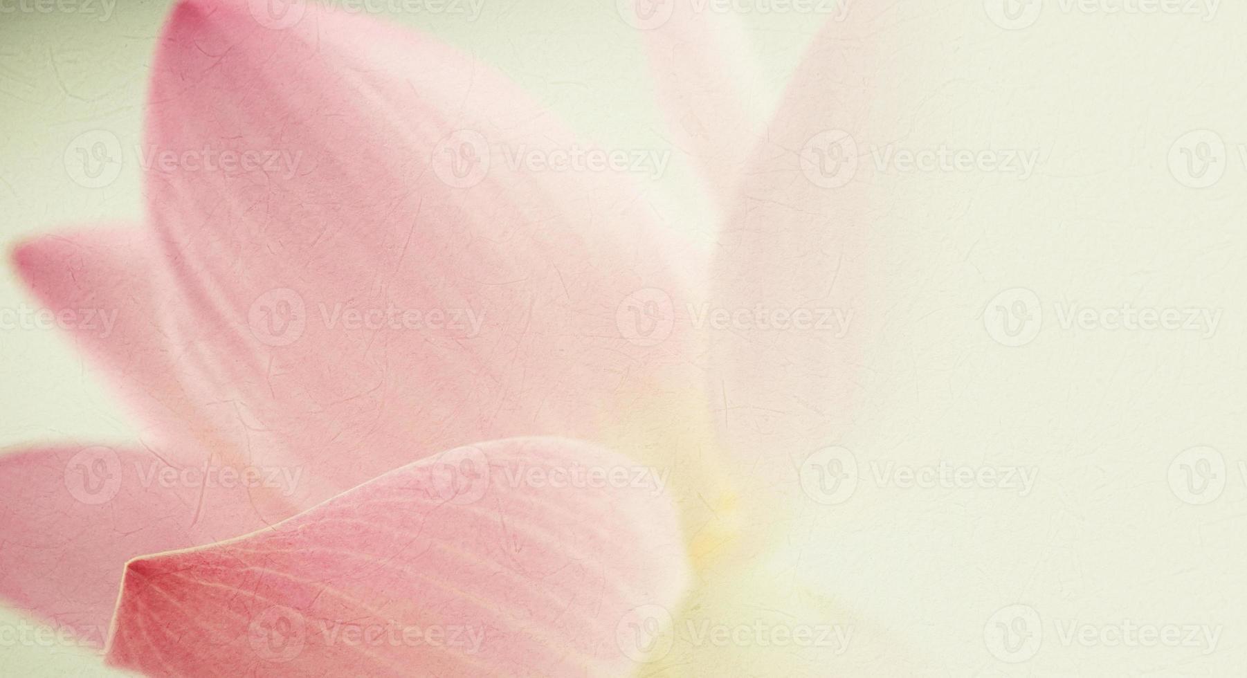 zoete kleur lotus in zachte en wazige stijl foto