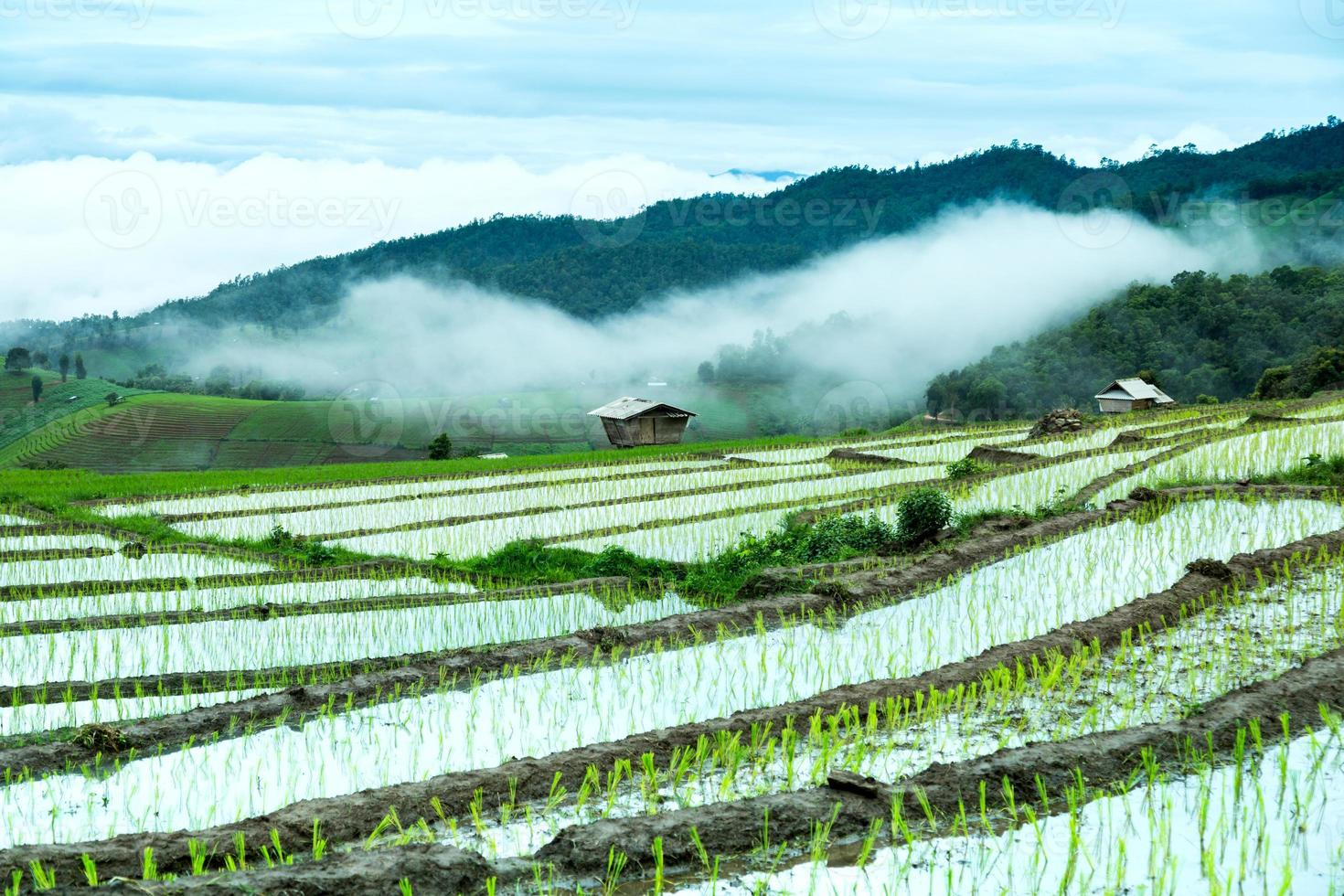 traditionele landbouw in cheing mai, noordelijk thailand. foto