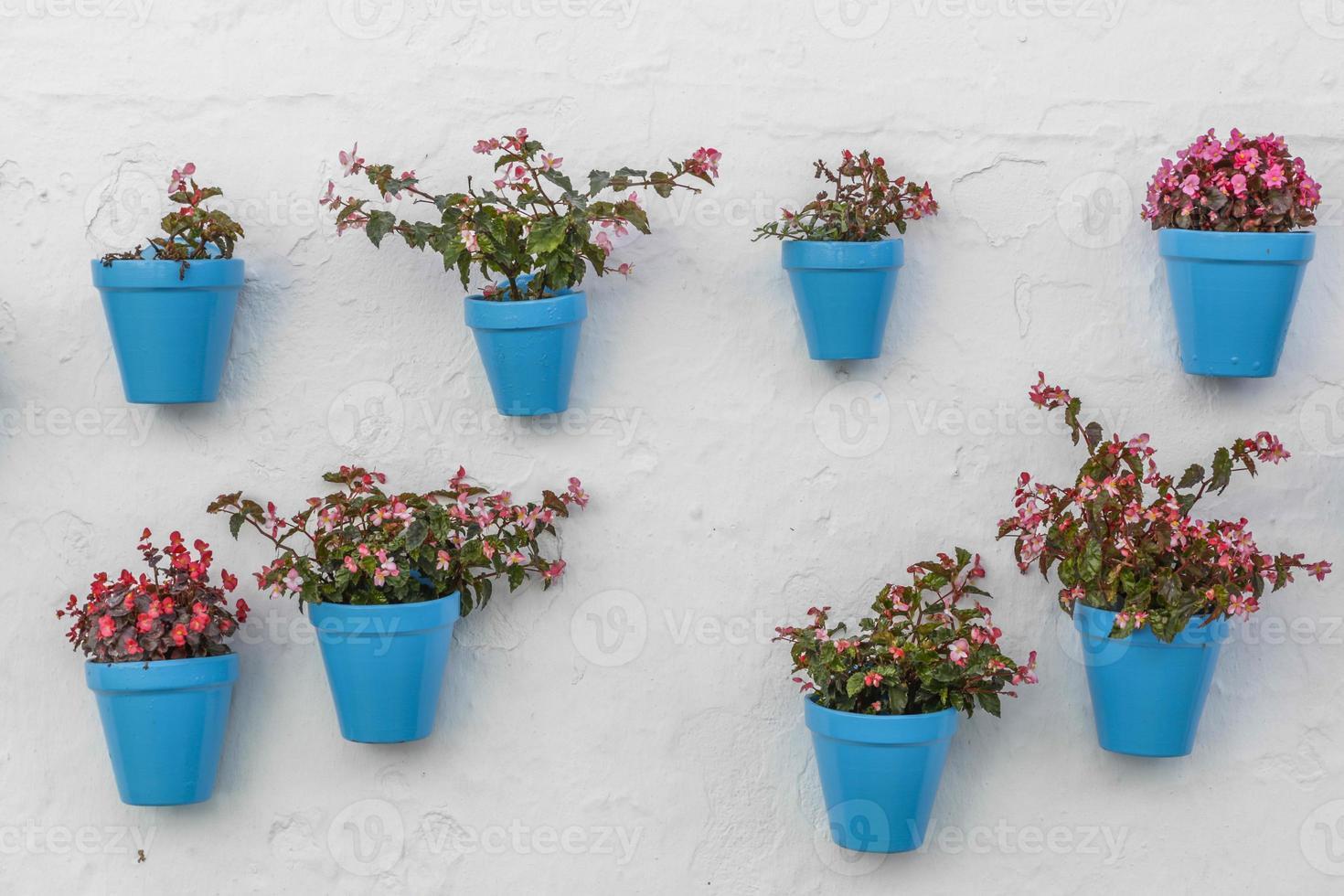 blauwe bloempot op een muur foto