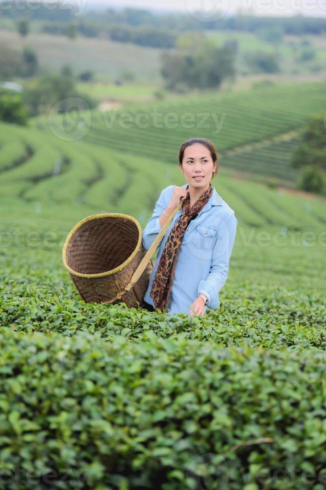 Azië mooie vrouw theebladeren plukken in plantage, lifestyle concept foto