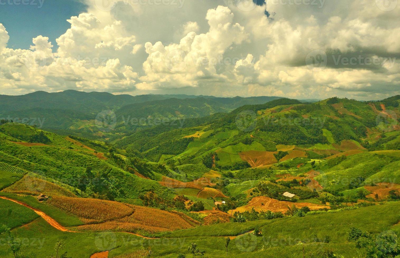 plantages op heuvelhellingen foto