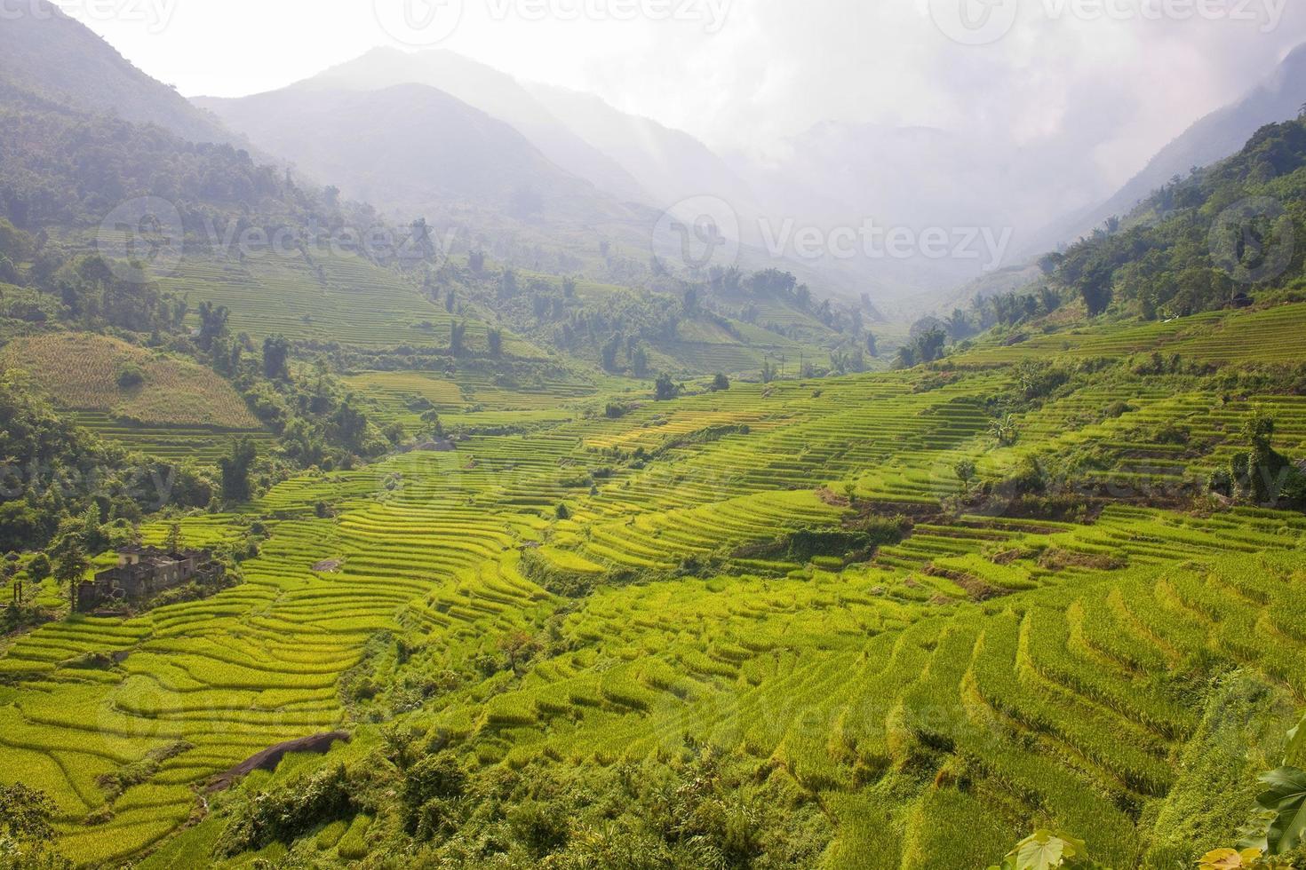 rijstvelden foto