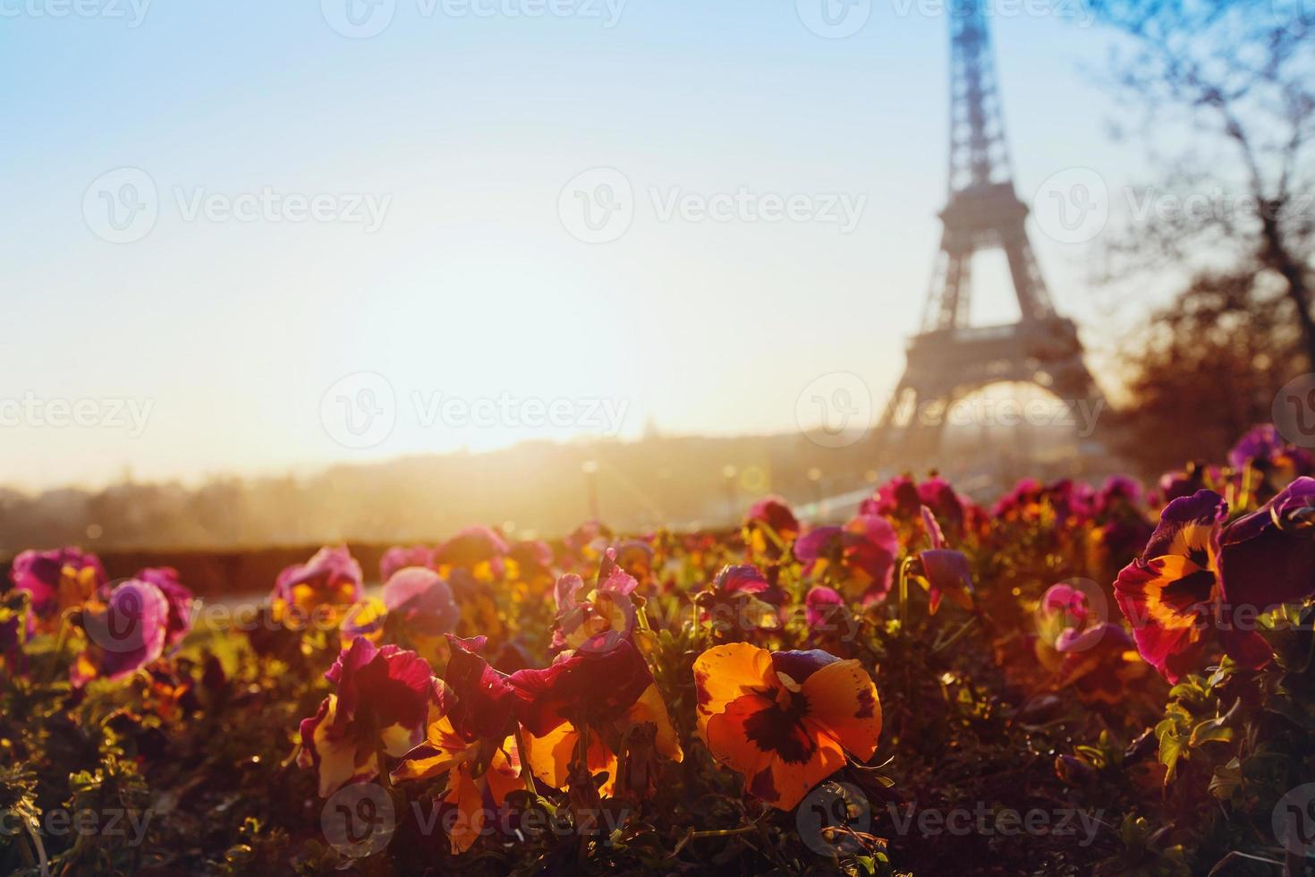 bloemen in de buurt van de Eiffeltoren foto