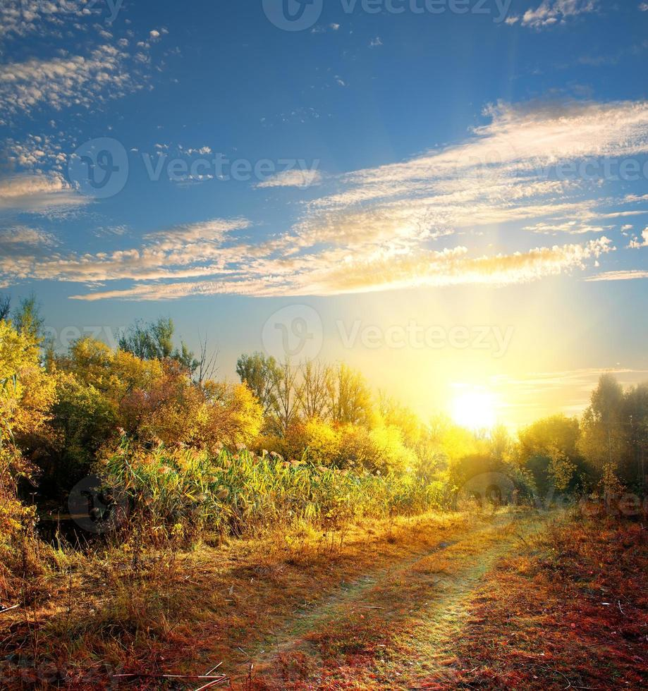 weg in de herfst foto