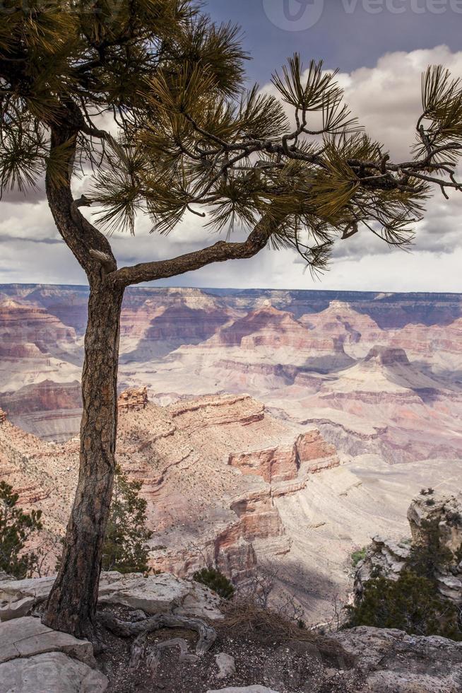 Nationaal Park Grand Canyon, Arizona foto