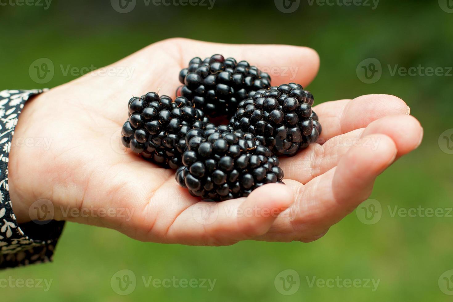 fruit verzamelen foto