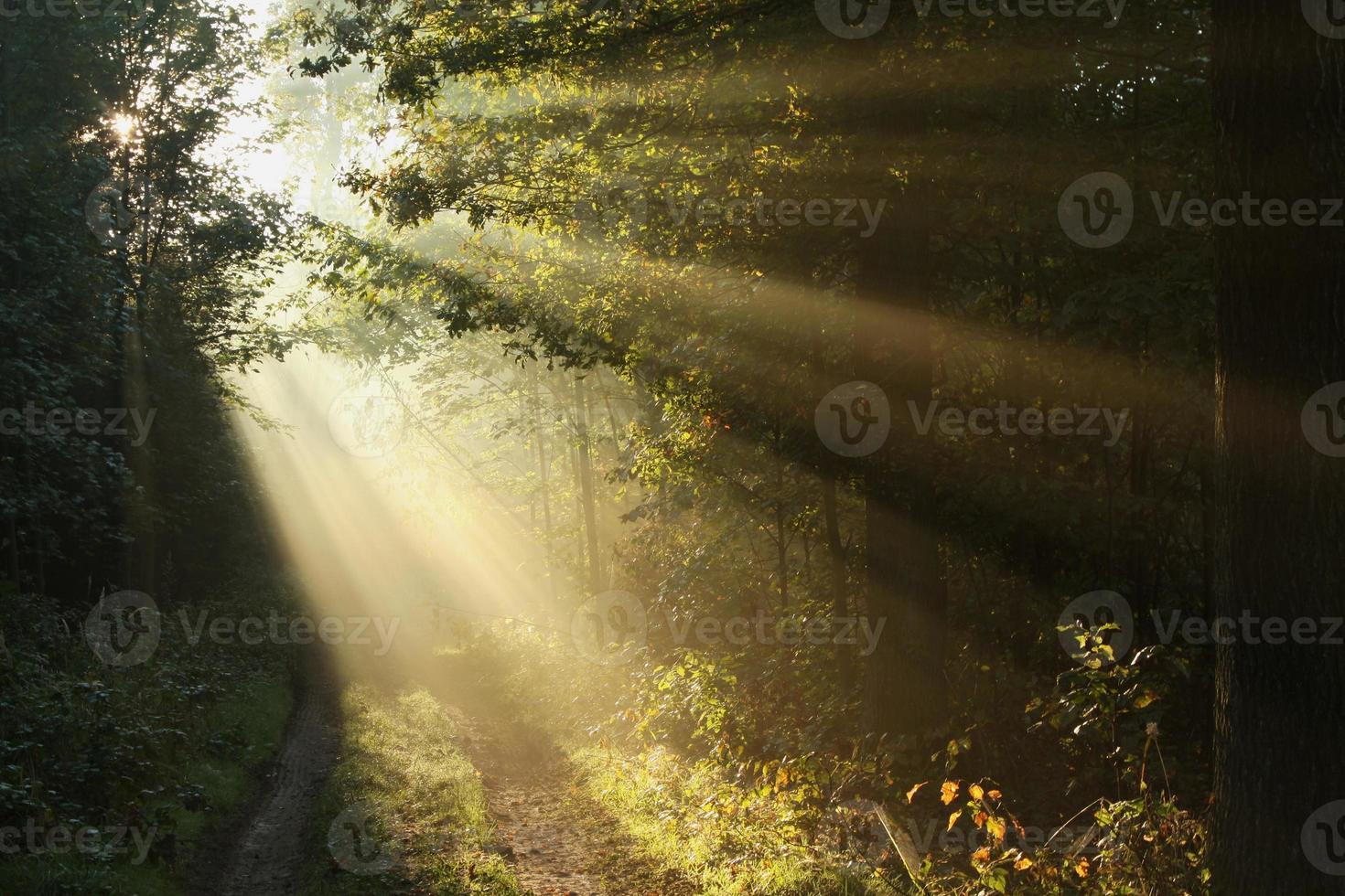 pad in herfst bos op een mistige ochtend foto