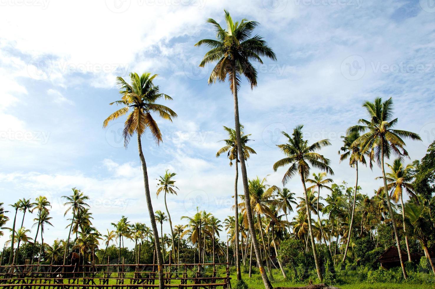 backwaters, kerala foto