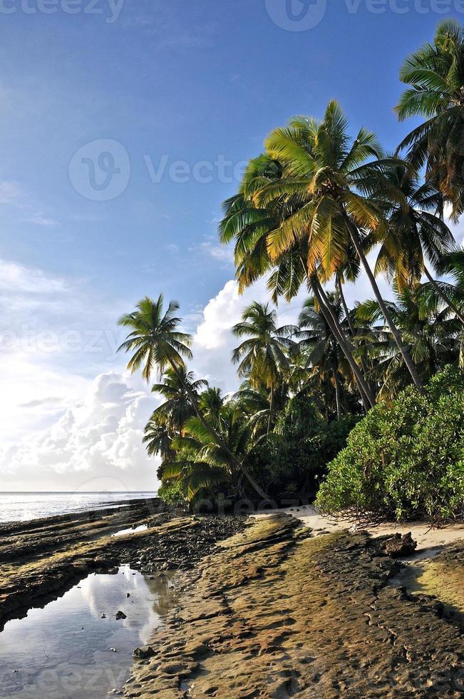 paradijselijk eiland met wit strand en kokospalmen aan de kust foto