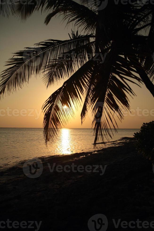 palm silhouet bij zonsondergang - hoge zon foto