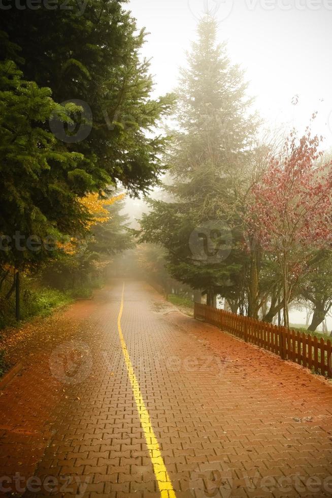 bosweg foto