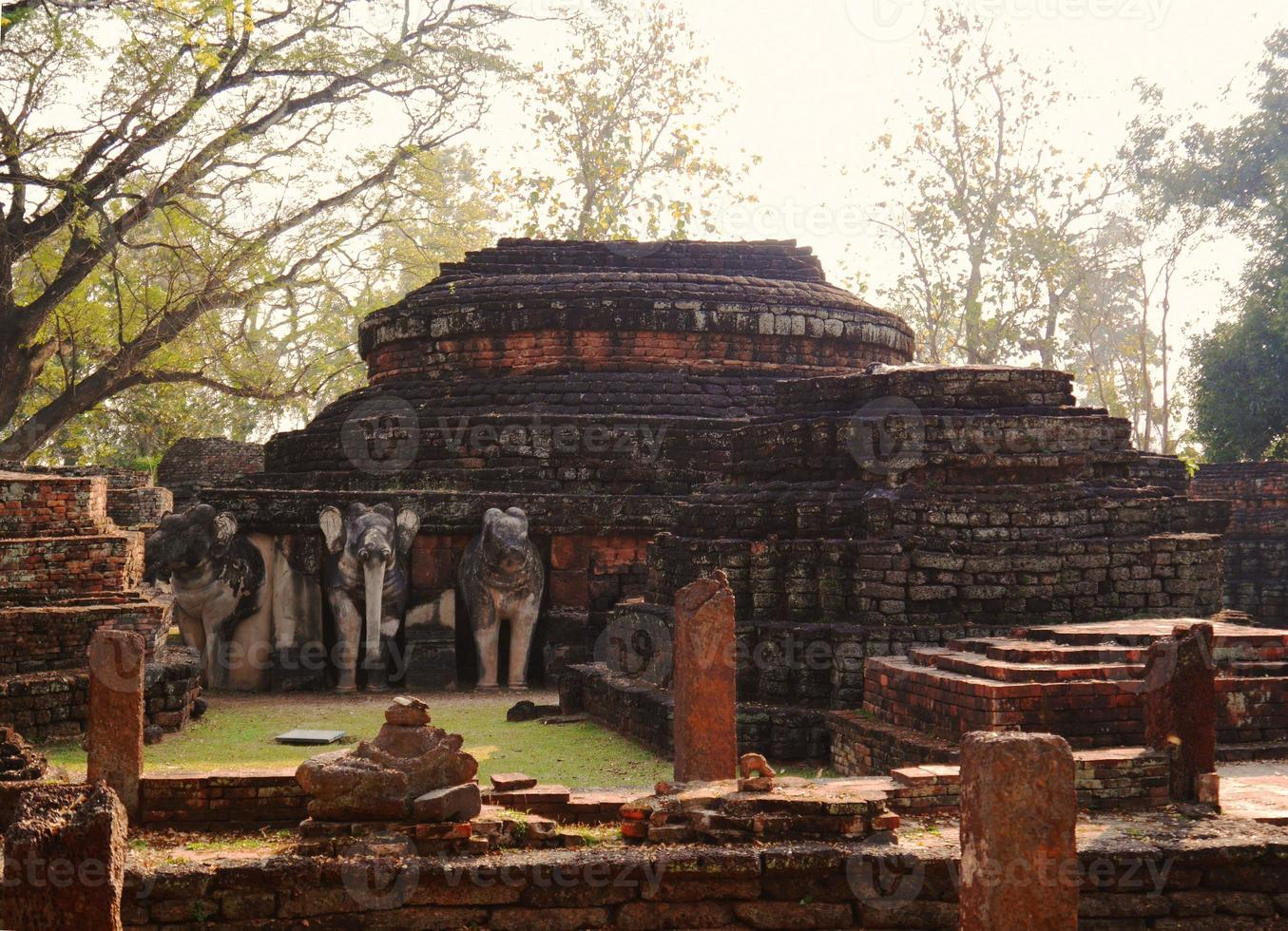 de olifanten in de buurt foto