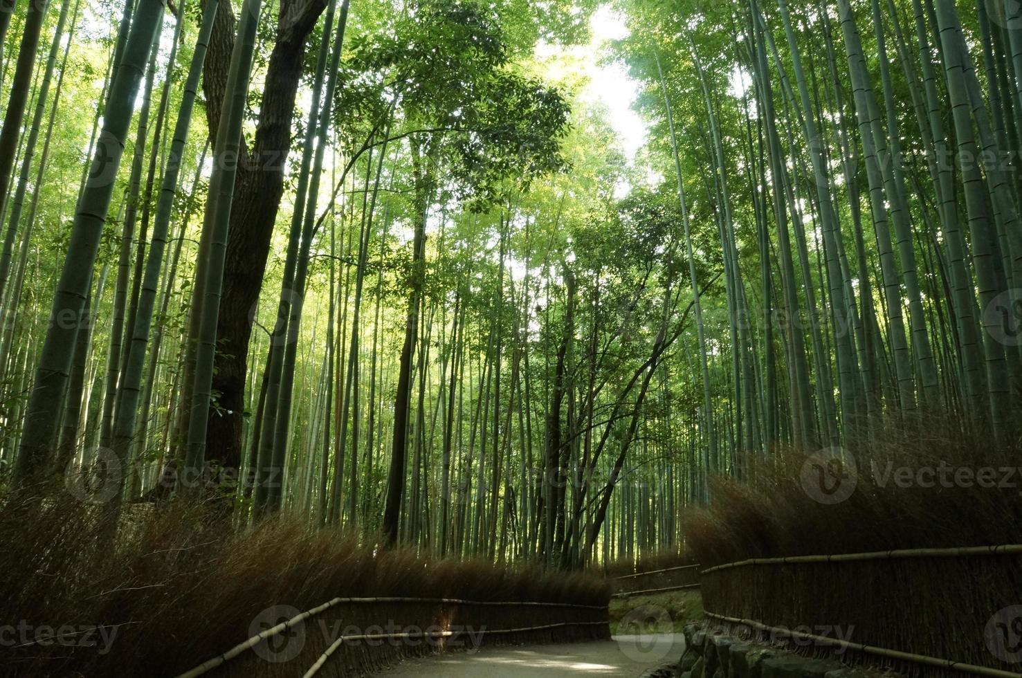 bamboe bos foto