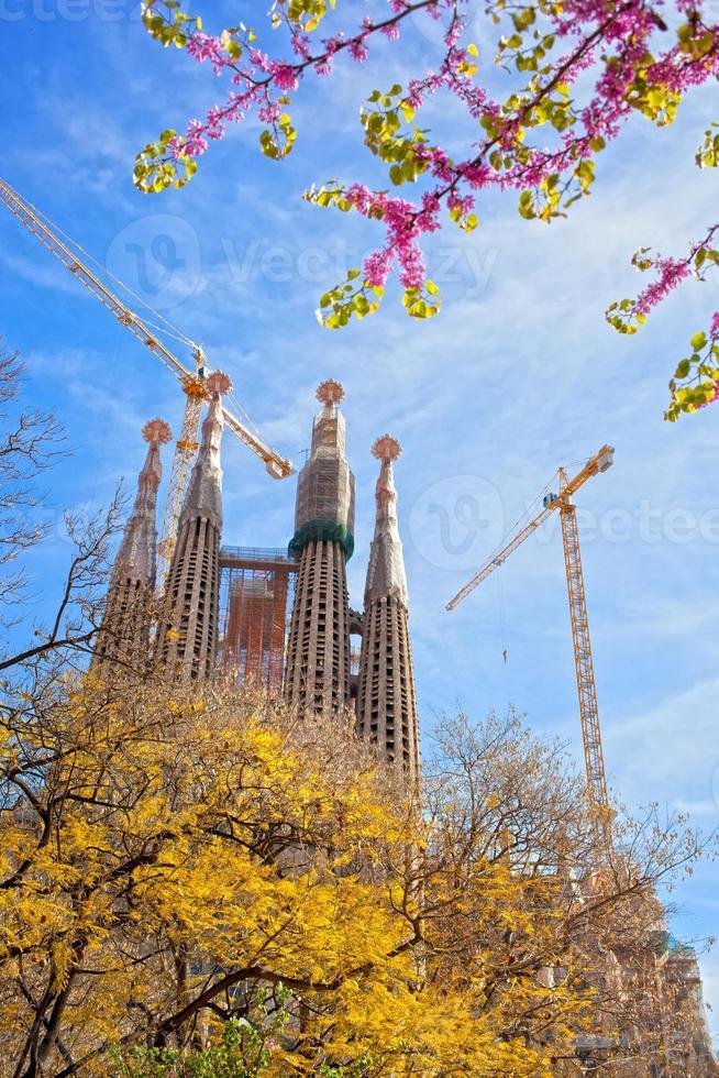 sagrada familia met bloeiende sakura in barcelona, spanje foto
