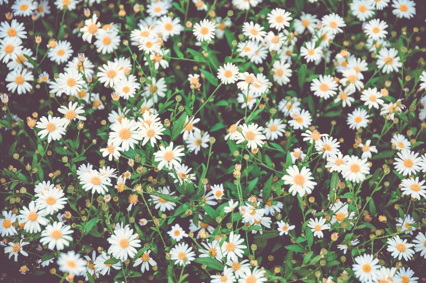 close-up van patch van madeliefjes foto