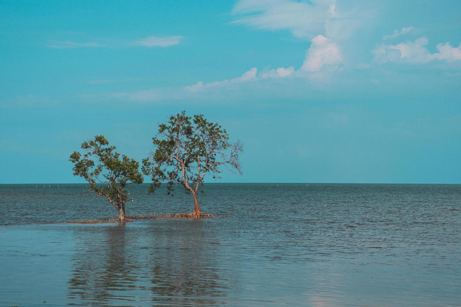 bomen aan de kust van surat thani in thailand foto