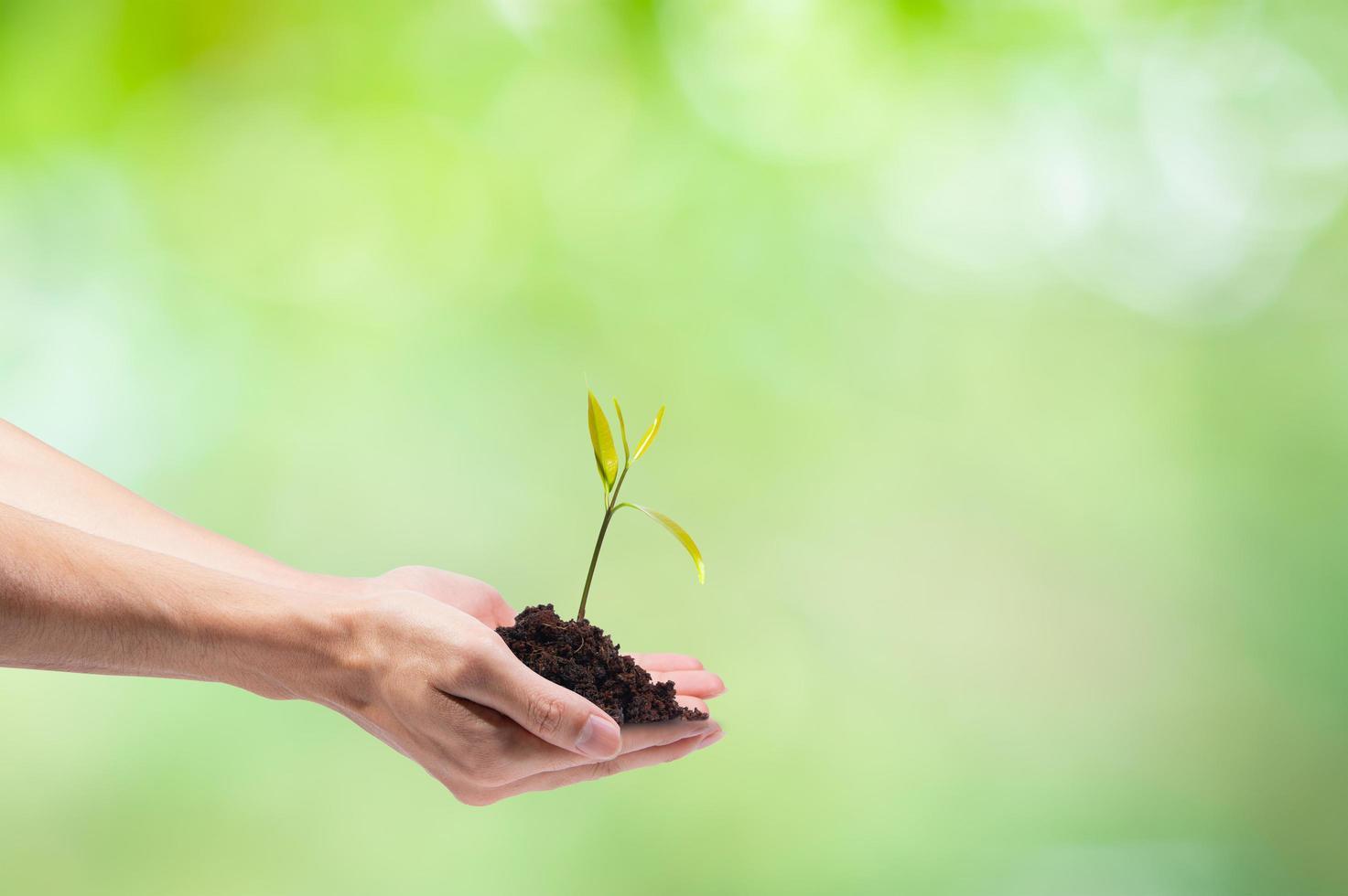 handen planten een kleine boom foto