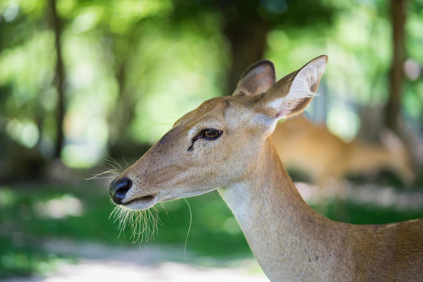 close up van antilopen foto