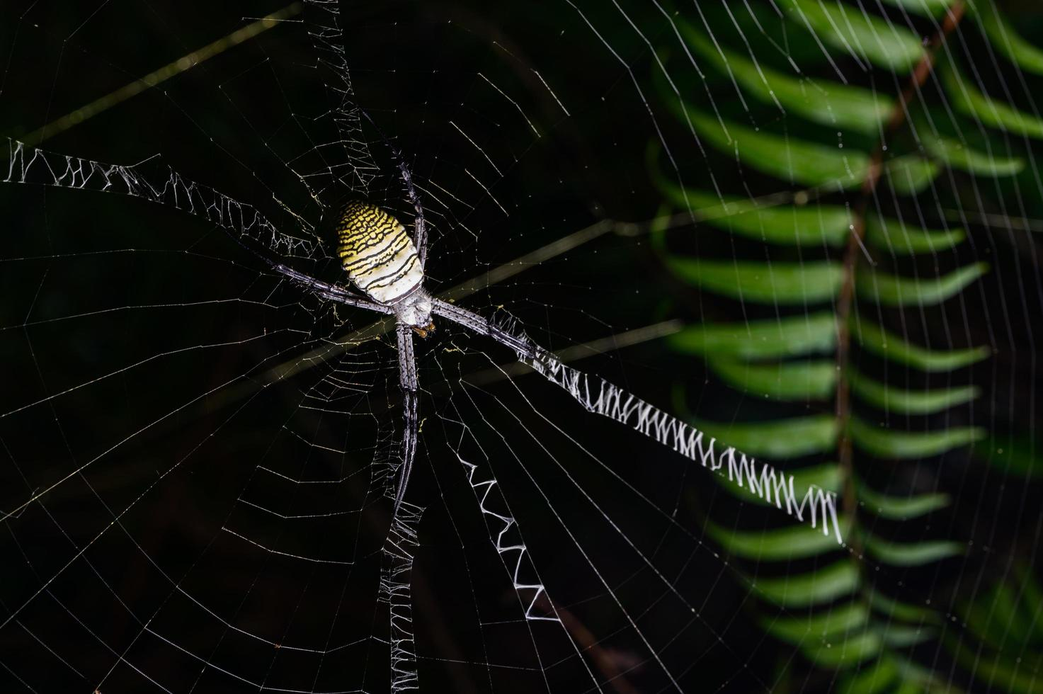 spin op web in de natuur foto