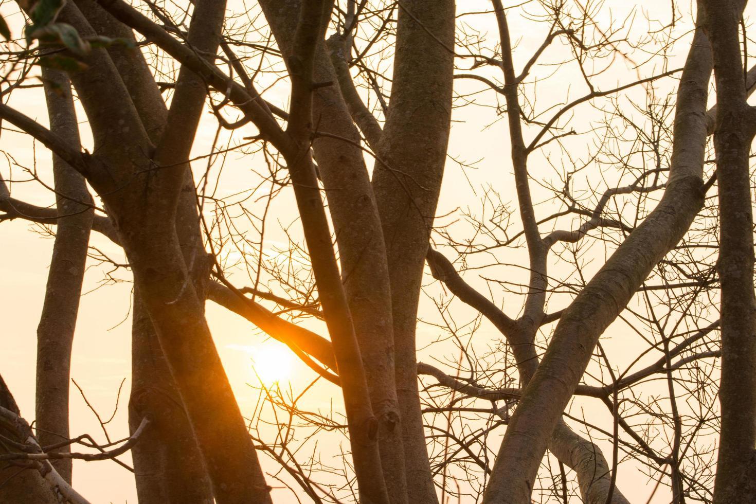 silhouet van bomen in de schemering foto