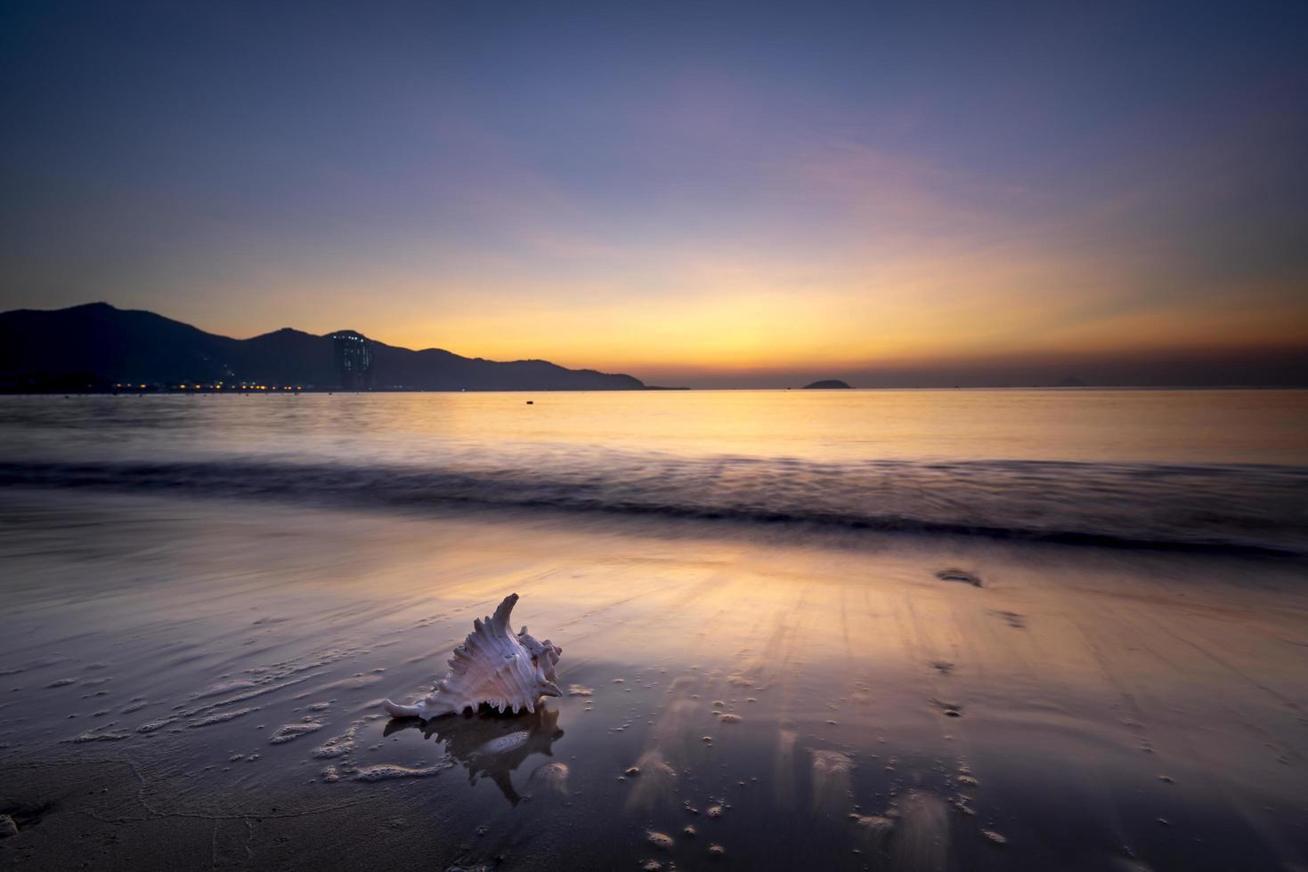 schelp op het strand bij zonsondergang foto
