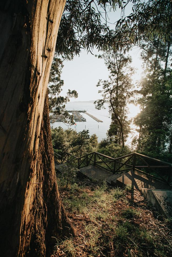 bomen en trappen in de buurt van de jachthaven foto