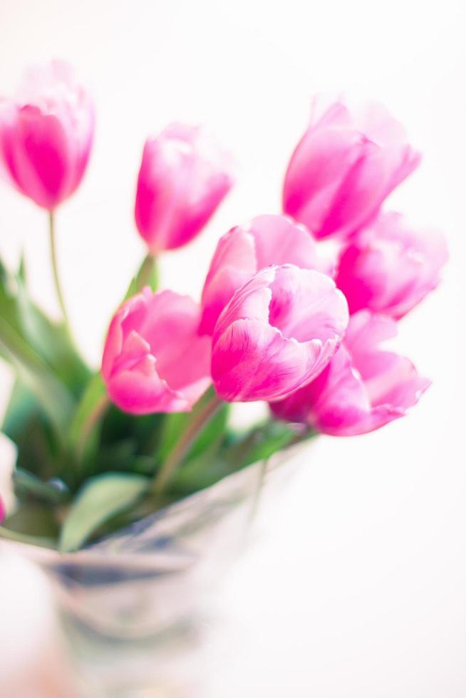roze tulpen in selectieve aandacht foto