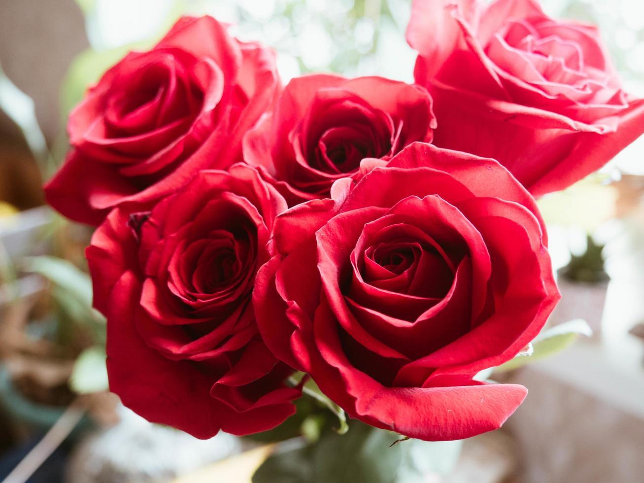 rode roos boeket foto