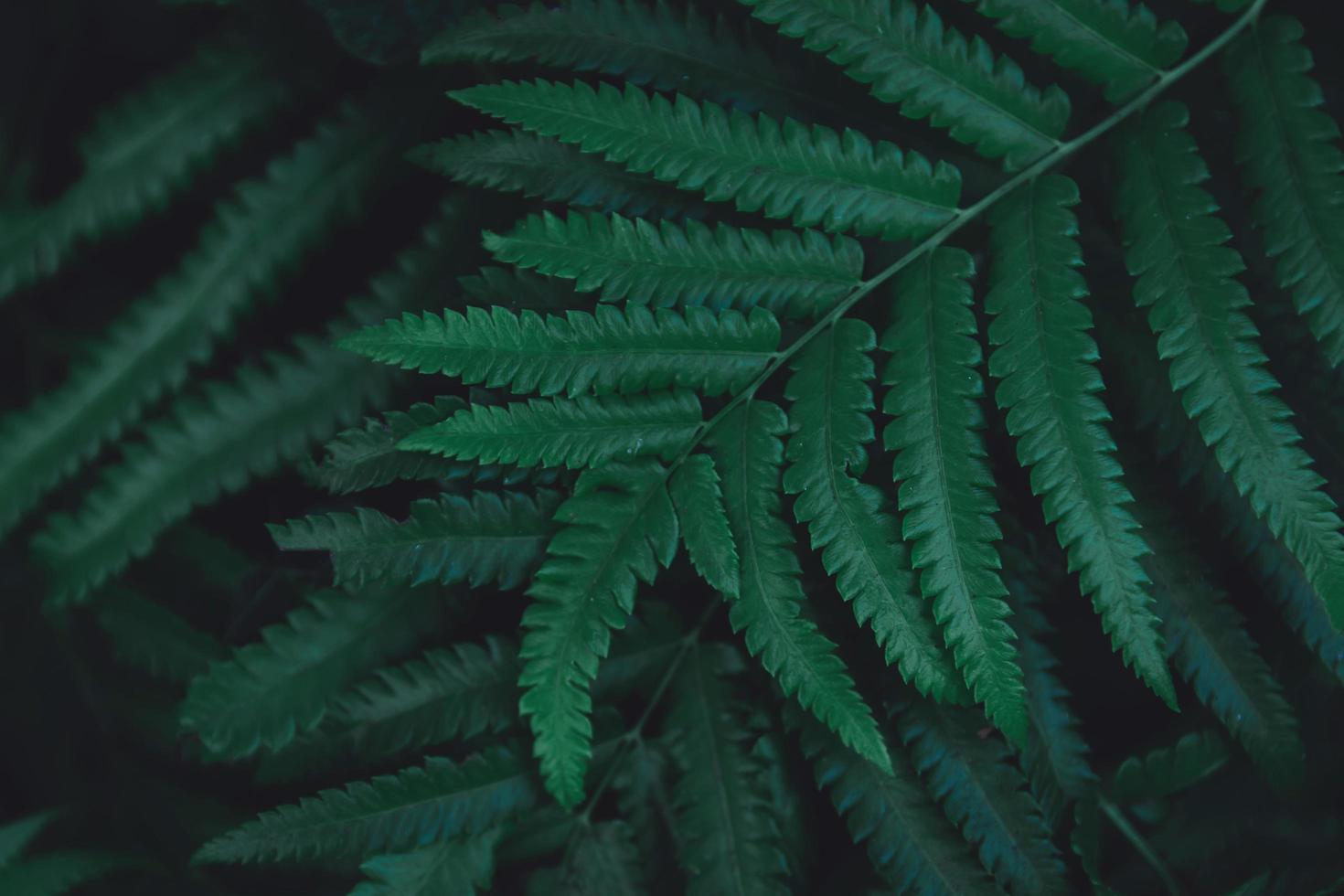 close-up van varenbladeren foto