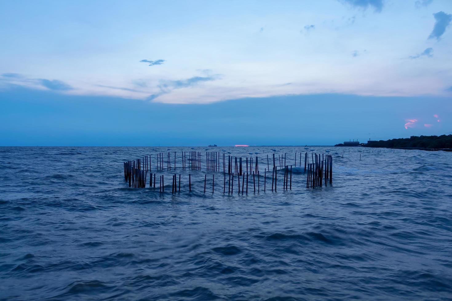 hart gevormd bamboe in het overzees in prakan samut, Thailand foto