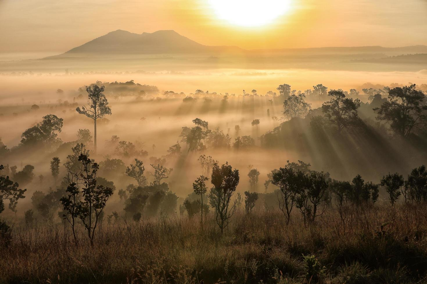 zonsondergang over mistig bos foto
