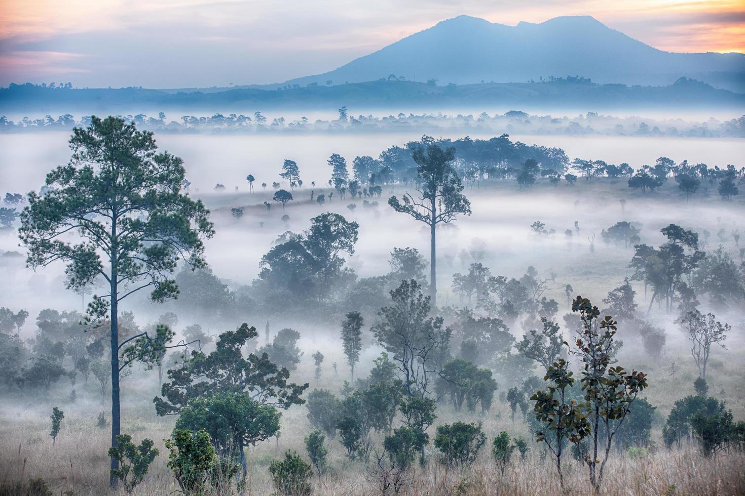 mistige zonsopgang in thung salaeng luang nationaal park foto