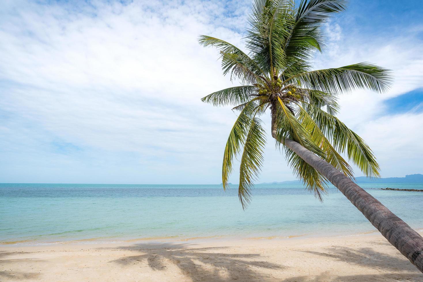 palmboom op tropisch strand foto