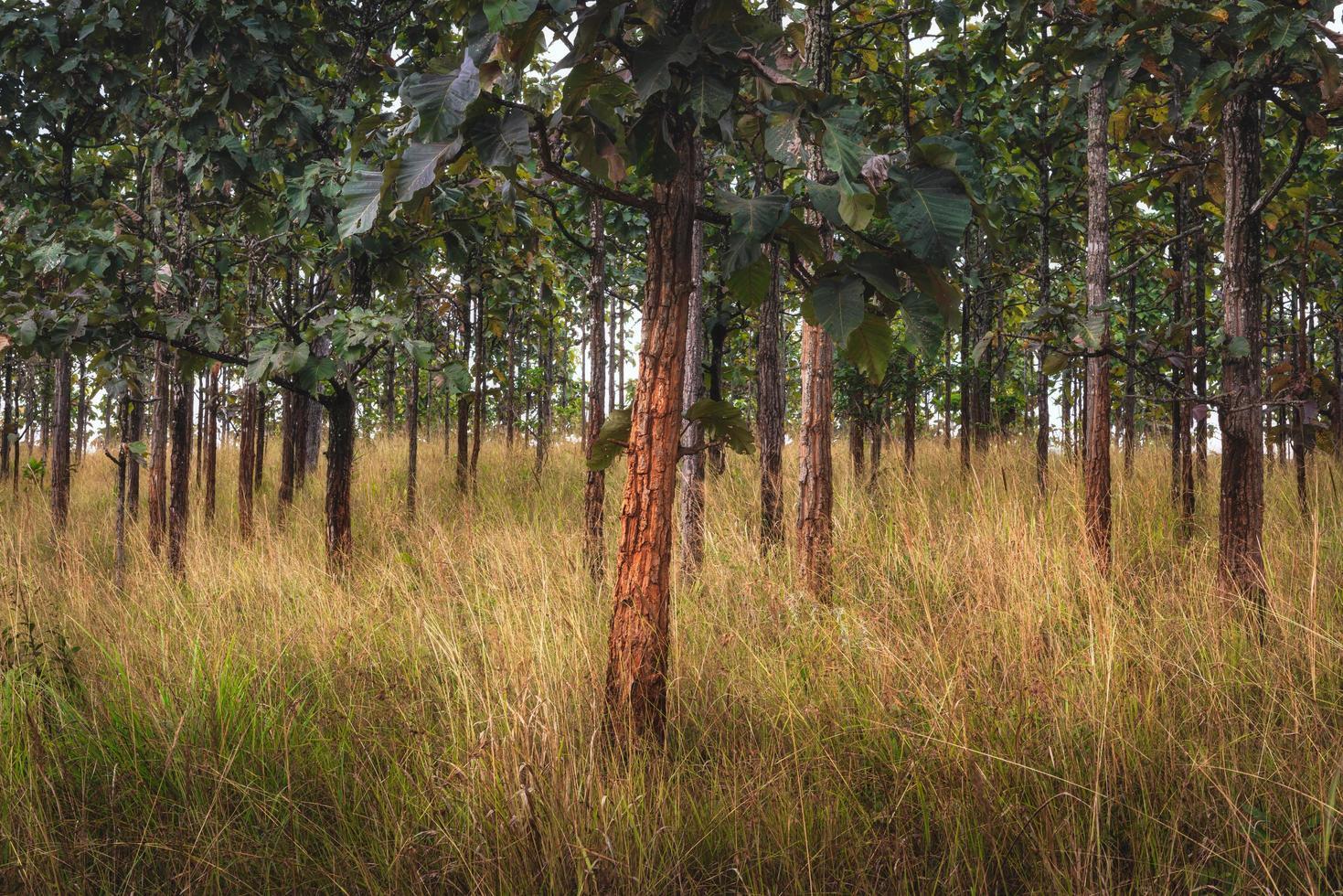 bomen en veld foto