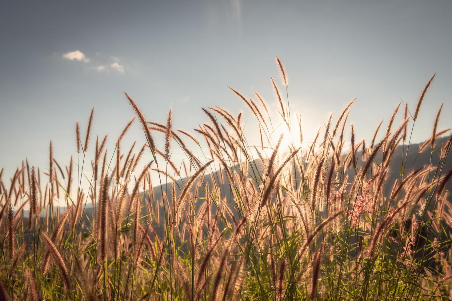 gras en bloemen met blauwe hemel foto