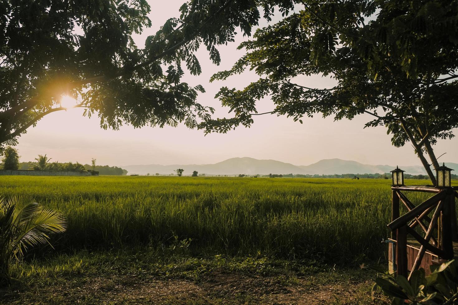 zonsondergang op het groene rijst veld in platteland foto