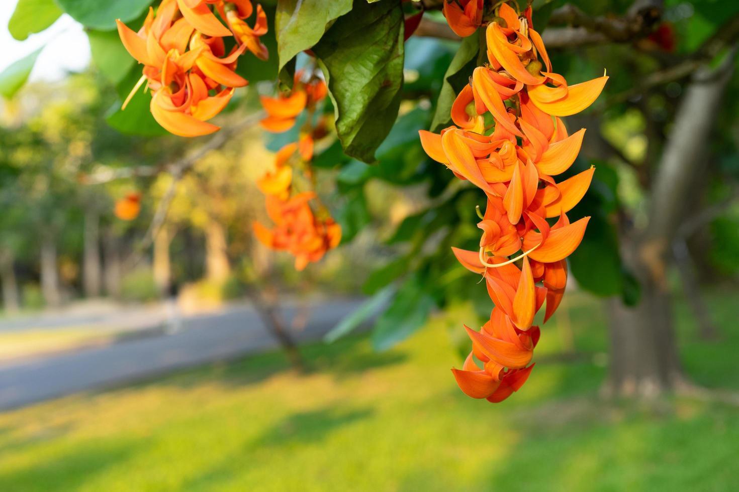 butea monosperma of bastaard teak bloem foto