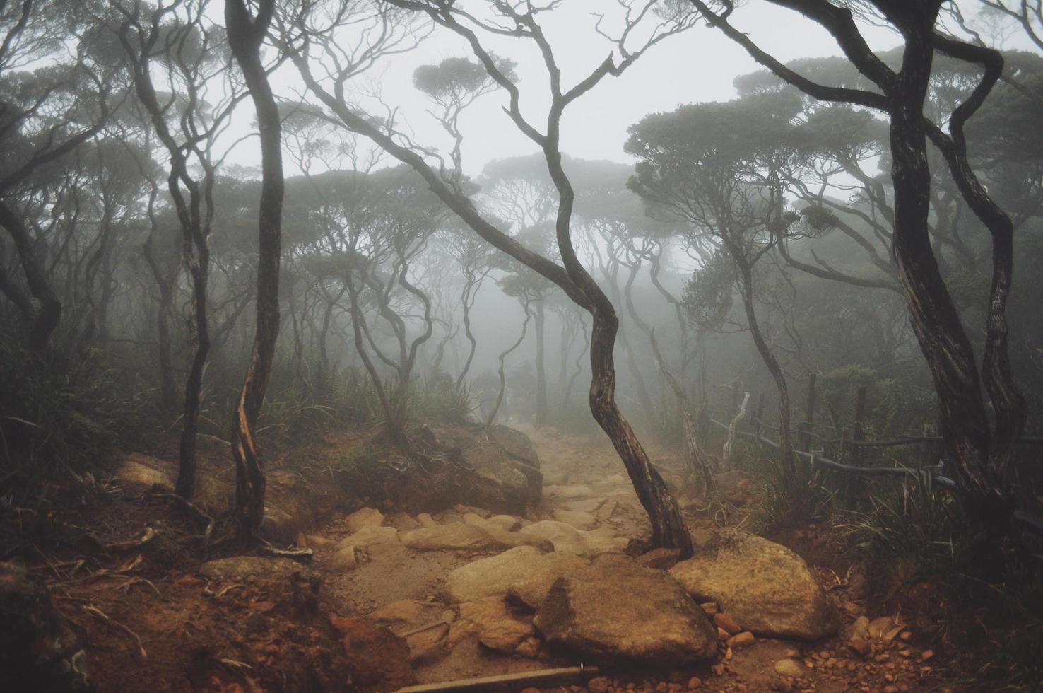 mistige bergbos foto