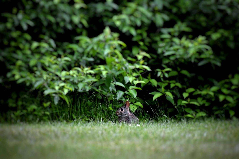 konijn in de buurt van planten foto