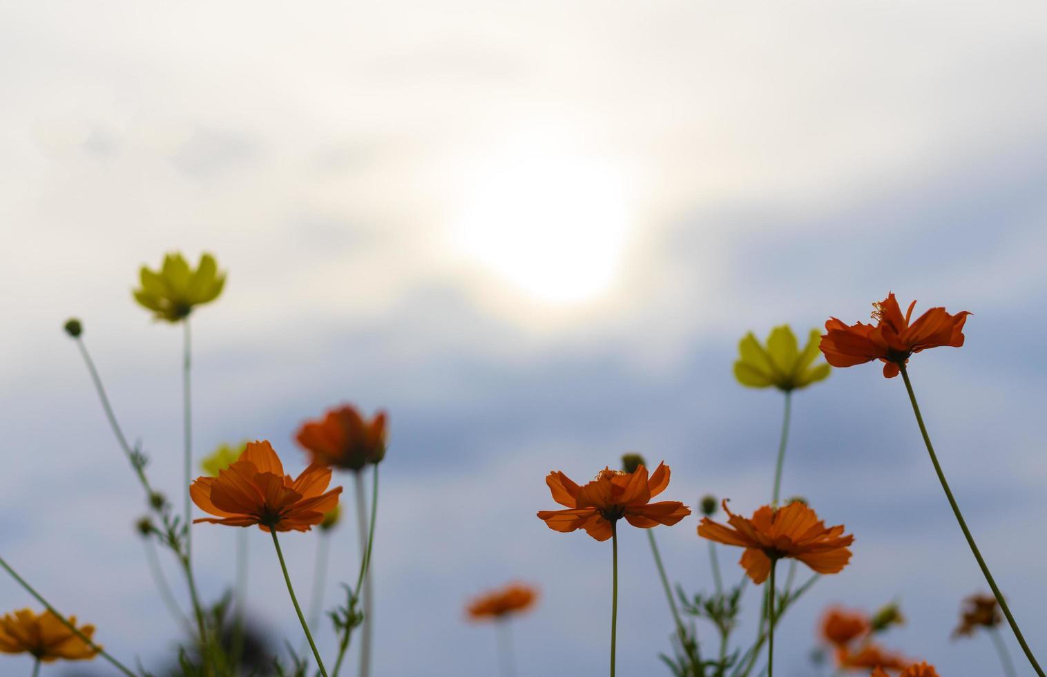 prachtige bloemen vanuit het oog van de mier. foto