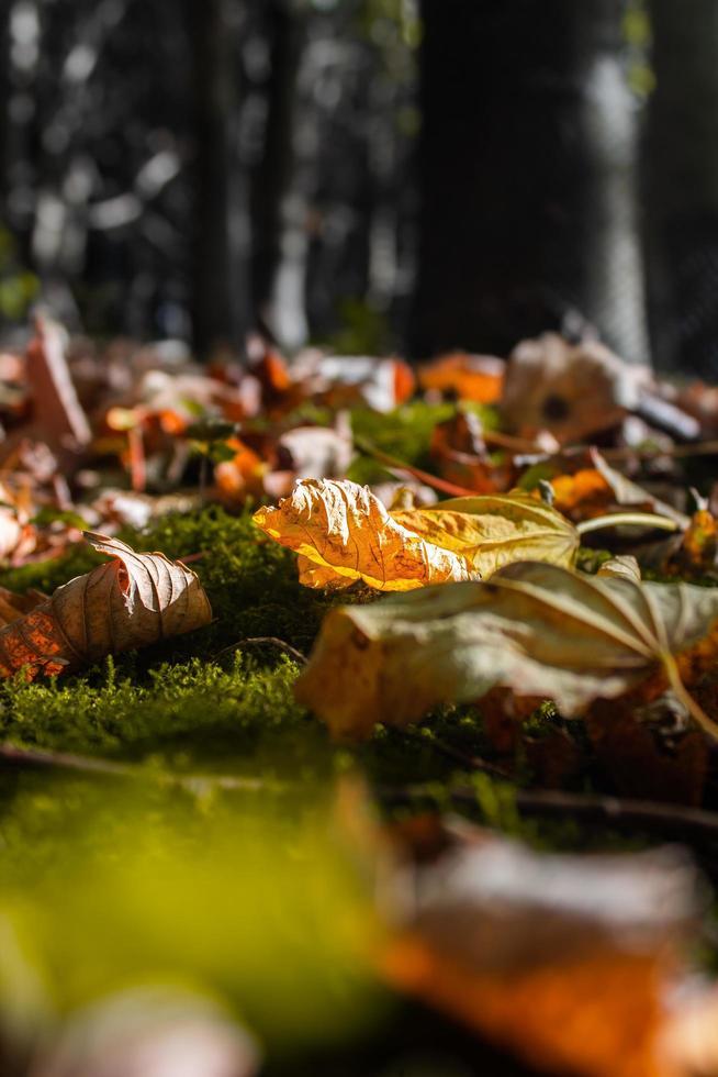 kleurrijke gevallen bladeren op bosbodem foto