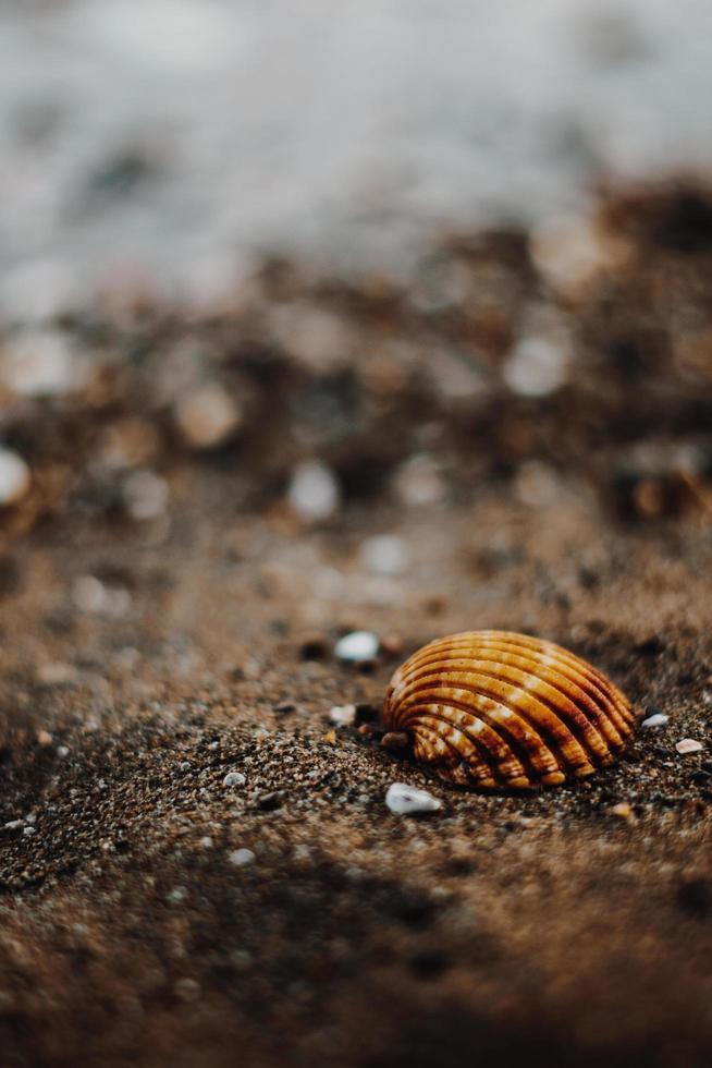 close-up van zeeschelp op strand foto