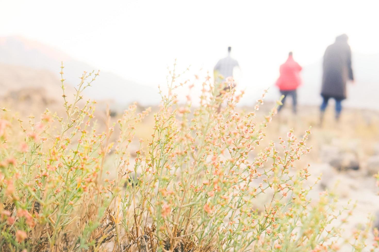 een struik van kleine wilde bloemen in de weide foto