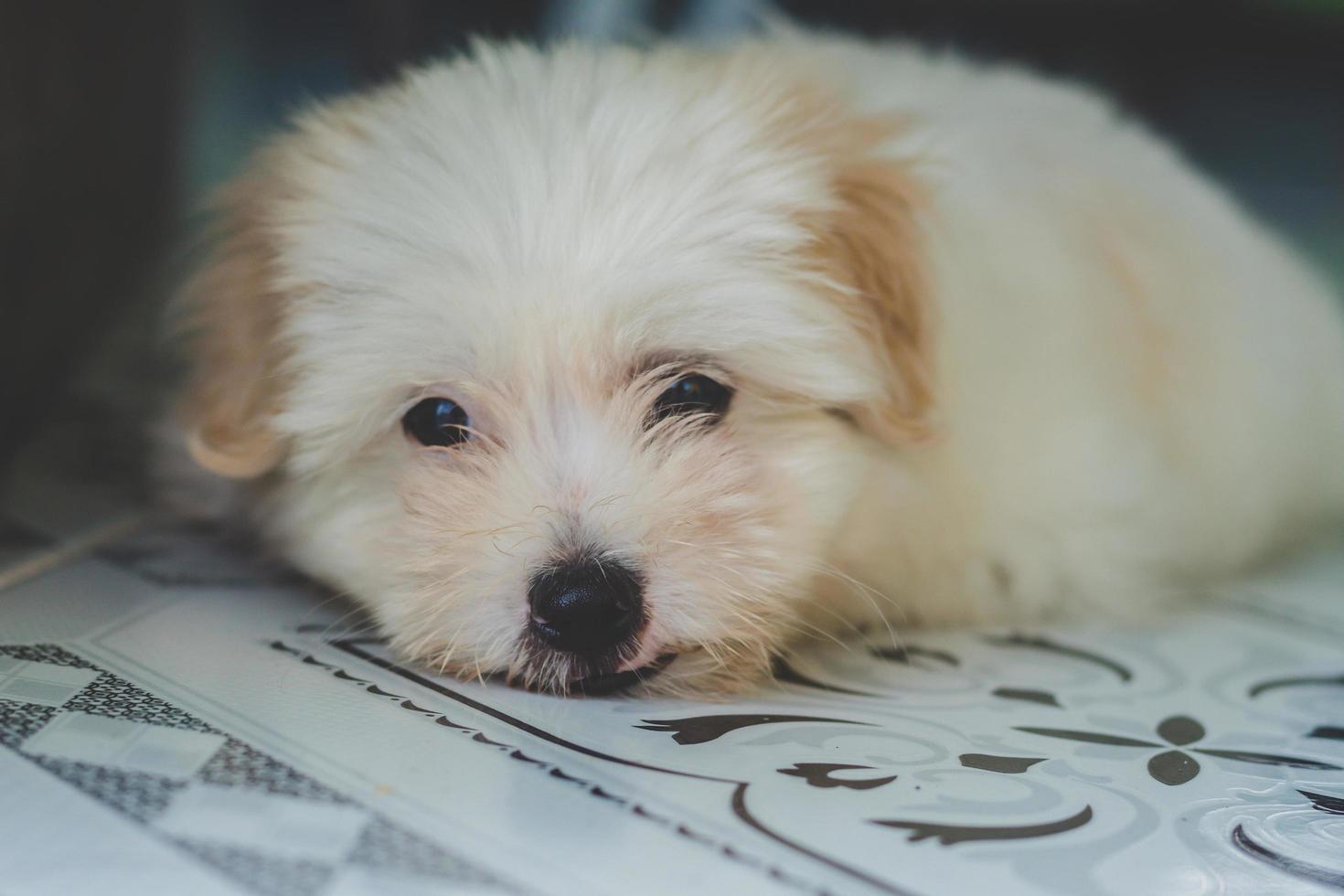 witte pup rusten foto