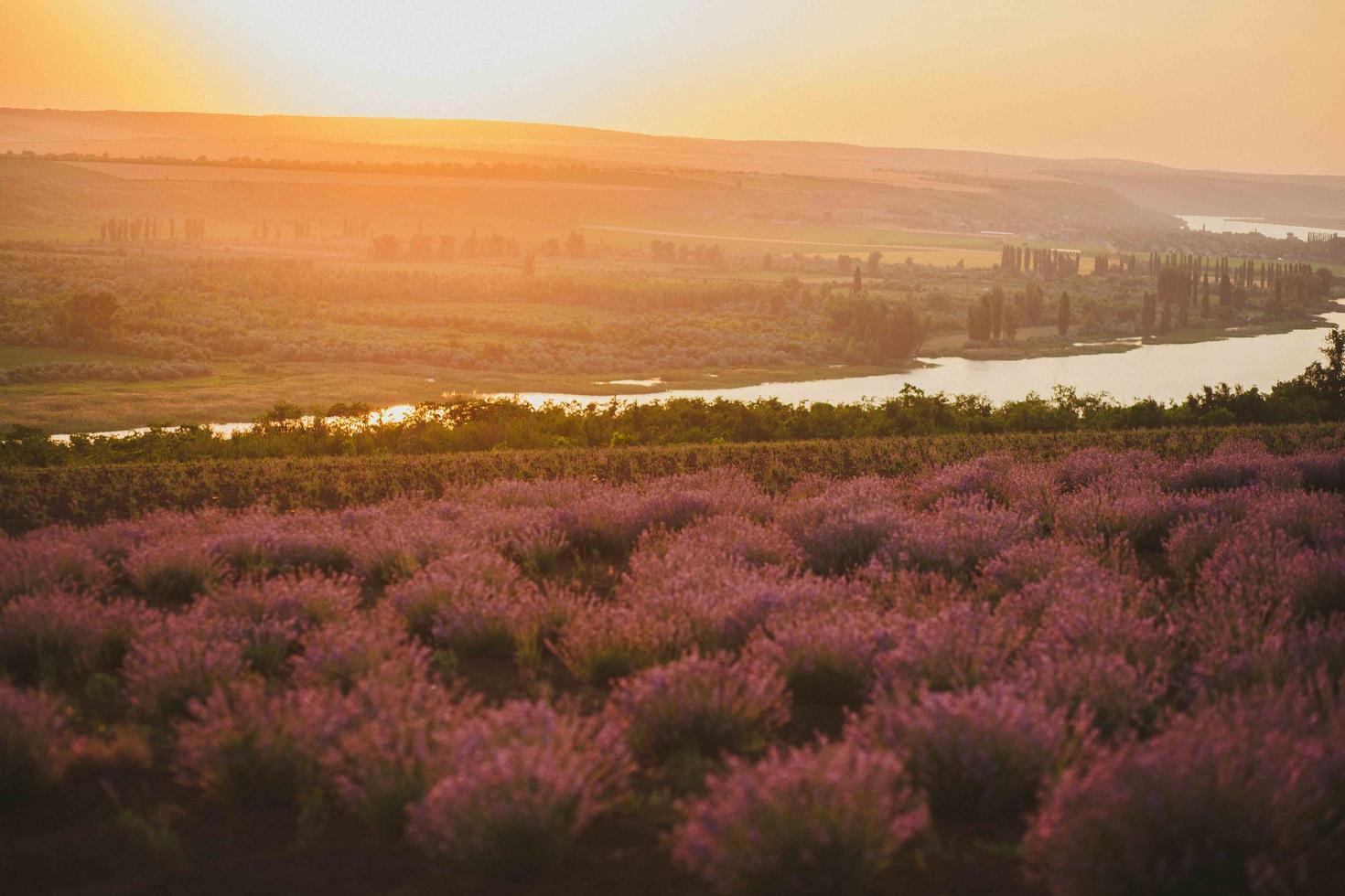 een veld van lavendel in de buurt van stream foto