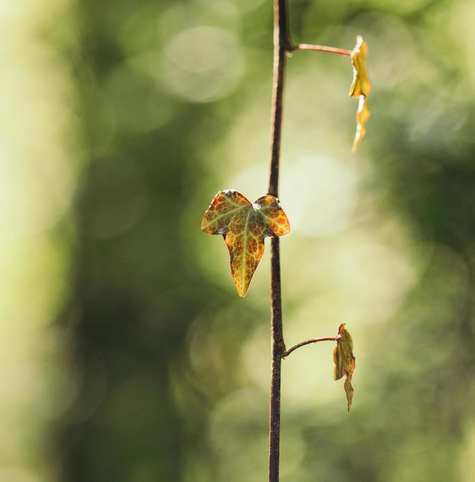 bruin gedroogd blad foto