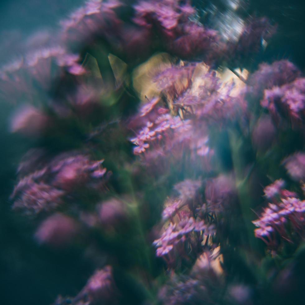 paarse en groene plant foto