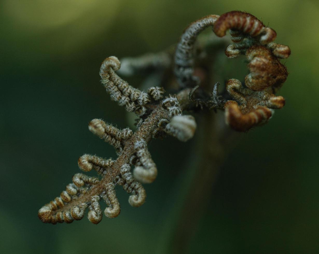 witte en bruine plant foto