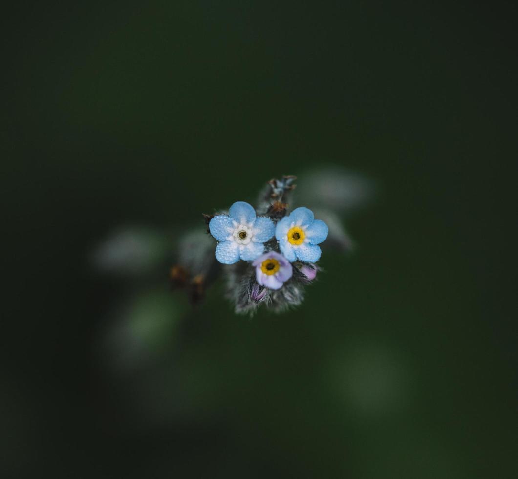 blauwe en witte bloem foto