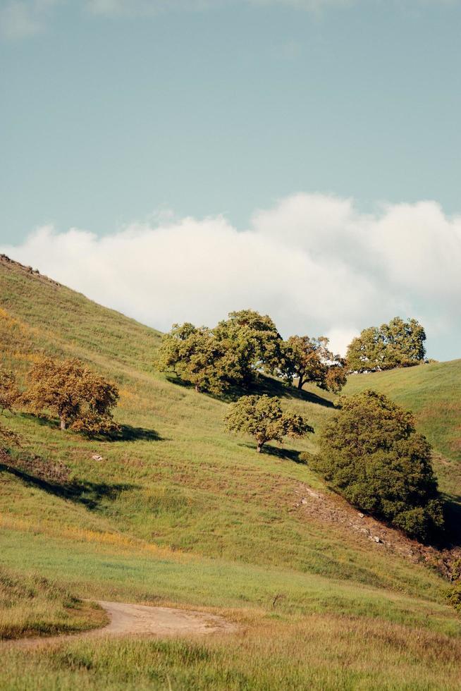 groene vallei grasland foto